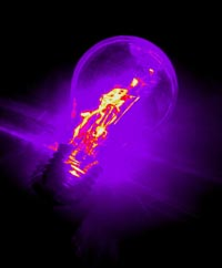 purple lightbulb